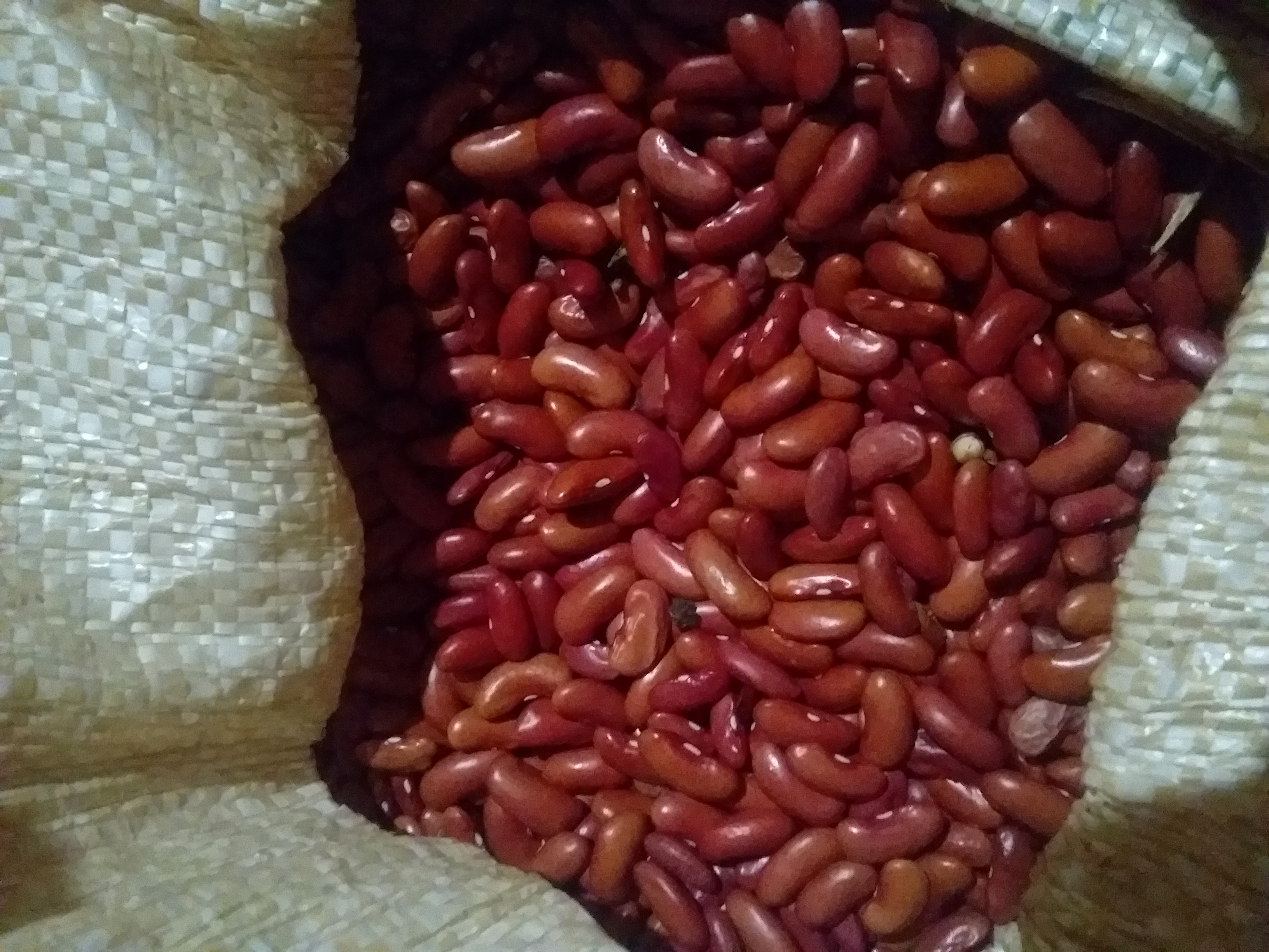 Bean for sale 1.50 de lbs in santa elena cayo